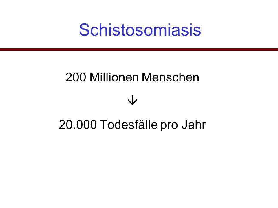 Schistosomiasis 200 Millionen Menschen  20.000 Todesfälle pro Jahr