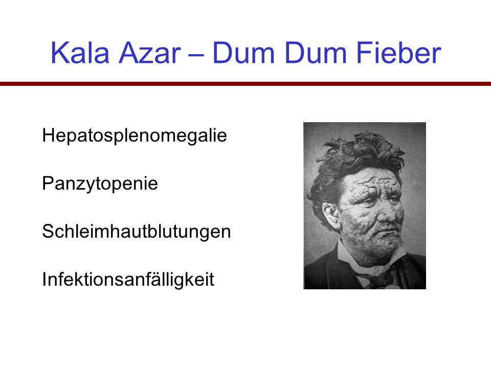 Kala Azar – Dum Dum Fieber Hepatosplenomegalie Panzytopenie Schleimhautblutungen Infektionsanfälligkeit
