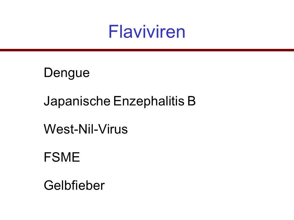 Flaviviren Dengue Japanische Enzephalitis B West-Nil-Virus FSME Gelbfieber