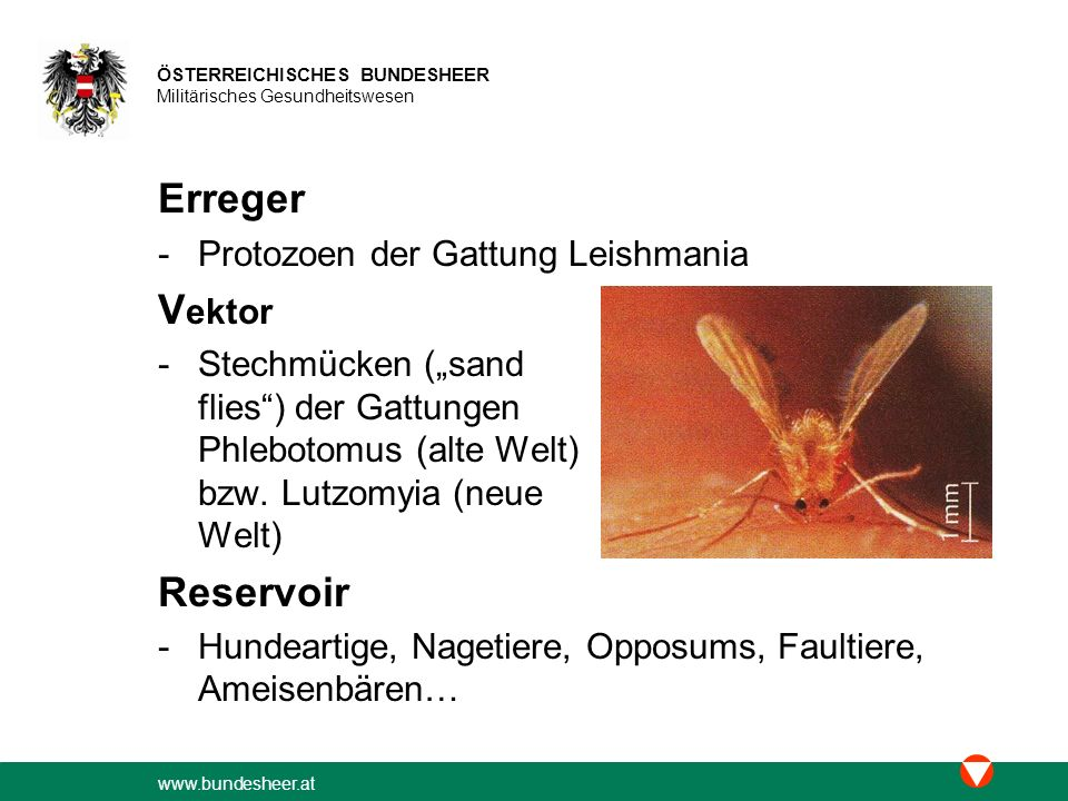 www.bundesheer.at ÖSTERREICHISCHES BUNDESHEER Militärisches Gesundheitswesen Formen der kutanen Leishmaniose -(rein) kutane Leishmaniose (KL) -mukokutane Leishmaniose (MKL) -diffuse kutane Leishmaniose (DKL) -rezidivierende (kutane) Leishmaniose (LR) -post-Kala-Azar dermales Leishmanoid (PKDL) Inzidenz -~ 2,4 Millionen/Jahr weltweit (≥ 90% KL und MKL 1) ; viszerale Leishmaniose (VL) < 10%)