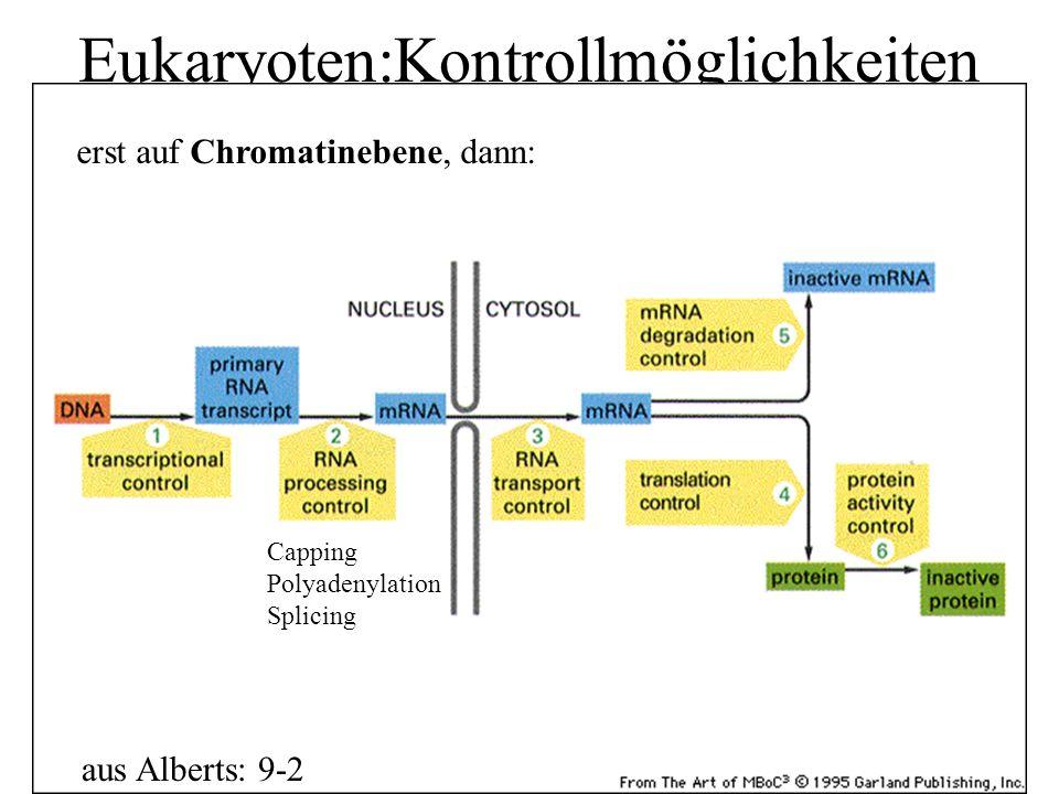 Eukaryoten:Kontrollmöglichkeiten aus Alberts: 9-2 erst auf Chromatinebene, dann: Capping Polyadenylation Splicing
