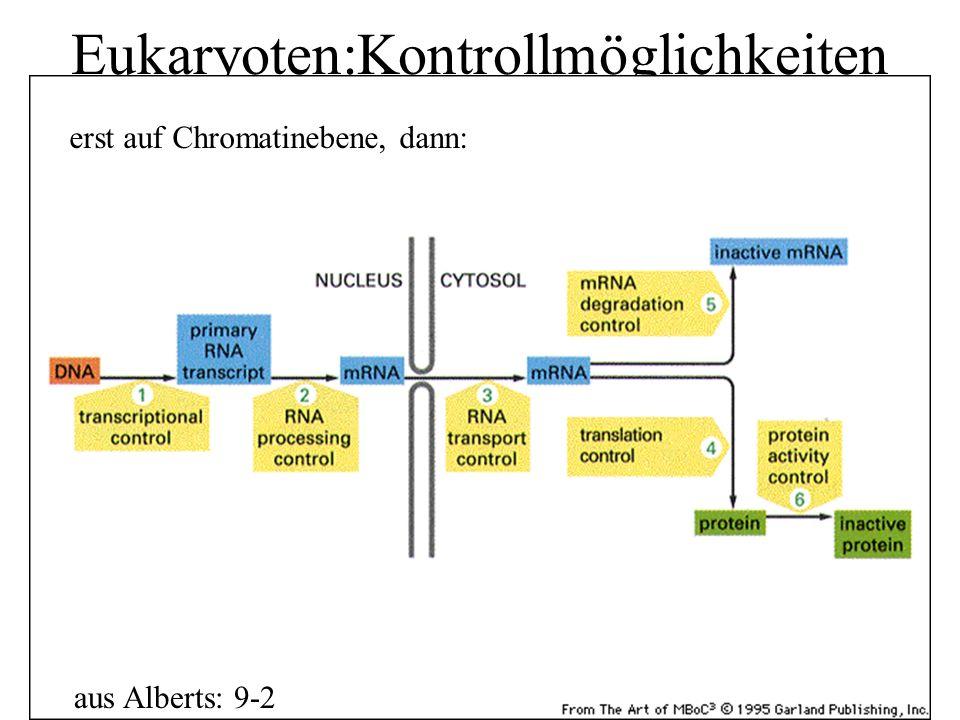 Eukaryoten:Kontrollmöglichkeiten aus Alberts: 9-2 erst auf Chromatinebene, dann: