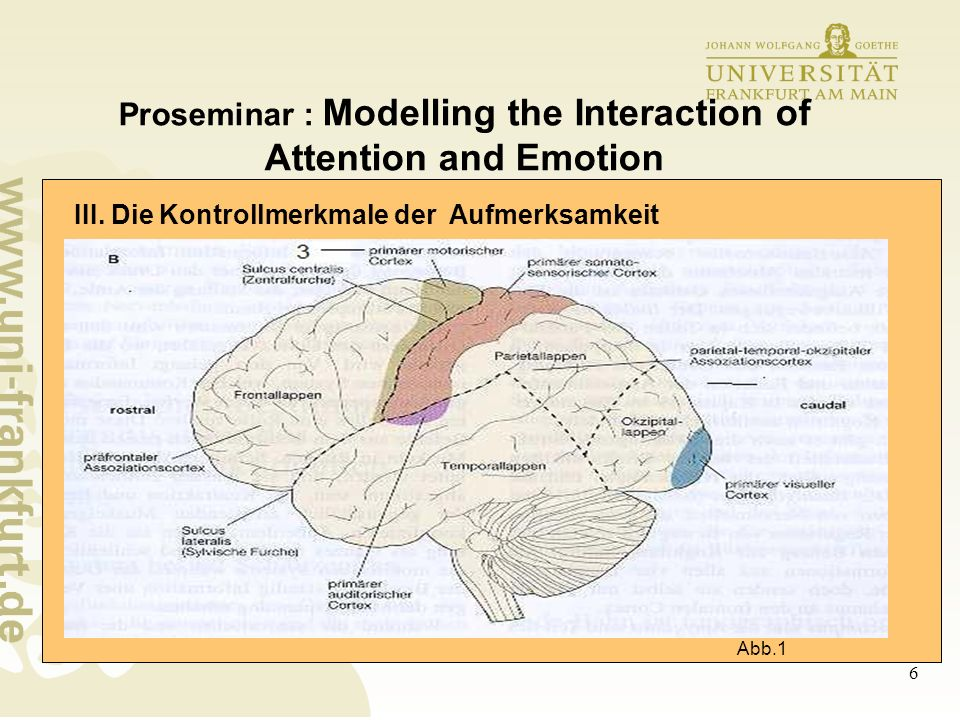 6 Proseminar : Modelling the Interaction of Attention and Emotion III.