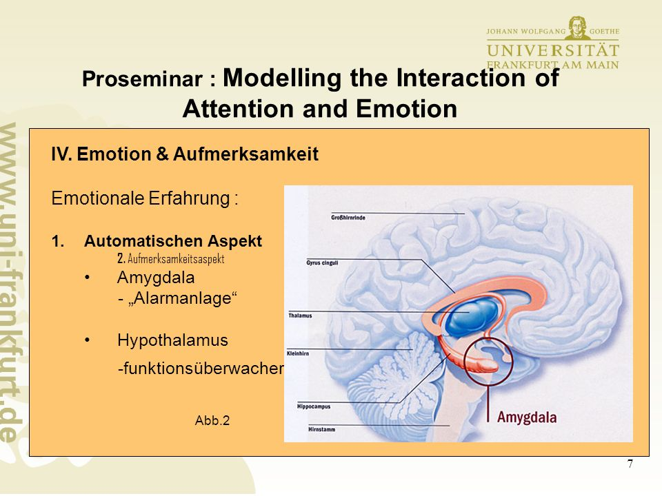 8 Proseminar : Modelling the Interaction of Attention and Emotion IV.