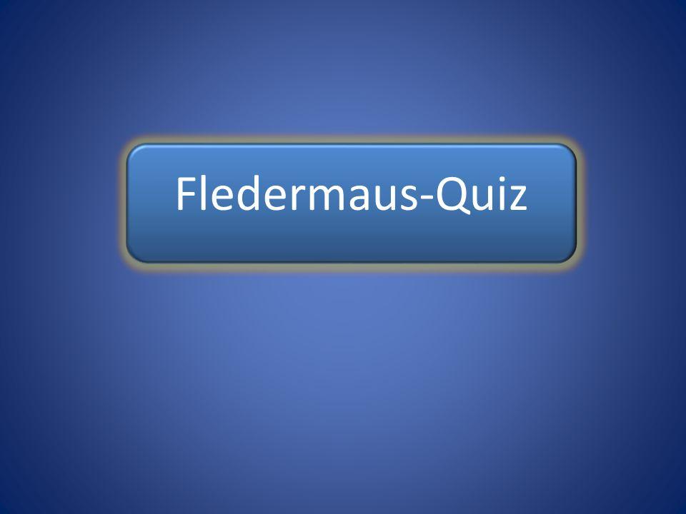 Fledermaus-Quiz