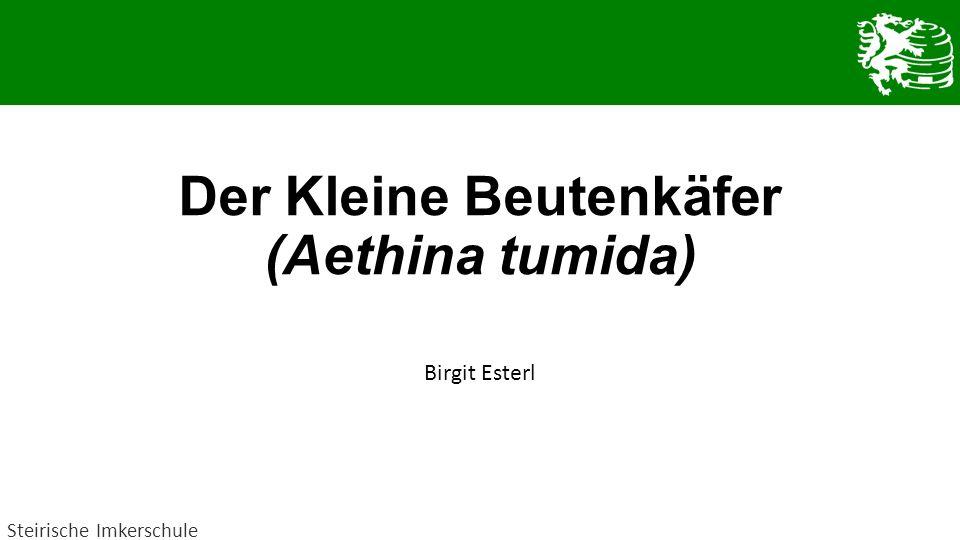 Der Kleine Beutenkäfer (Aethina tumida) Birgit Esterl Steirische Imkerschule