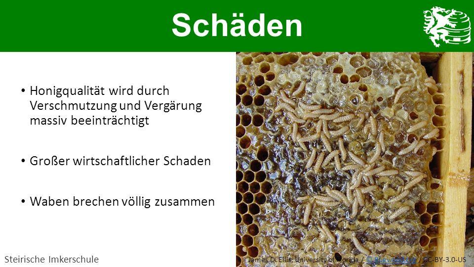 Honigqualität wird durch Verschmutzung und Vergärung massiv beeinträchtigt Großer wirtschaftlicher Schaden Waben brechen völlig zusammen Schäden Steir