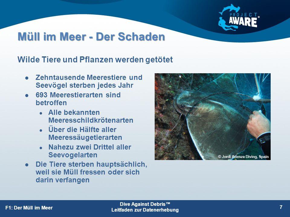 Müll im Meer - Der Schaden Zehntausende Meerestiere und Seevögel sterben jedes Jahr 693 Meerestierarten sind betroffen Alle bekannten Meeresschildkröt