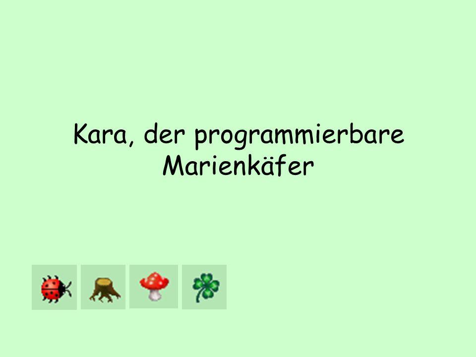 Kara, der programmierbare Marienkäfer