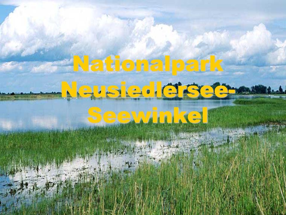 Nationalpark Neusiedlersee- Seewinkel