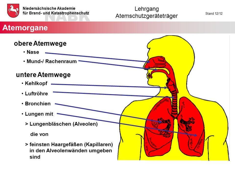 NABK Niedersächsische Akademie für Brand- und Katastrophenschutz Lehrgang Atemschutzgeräteträger Stand 12/12 obere Atemwege Nase Mund-/ Rachenraum unt