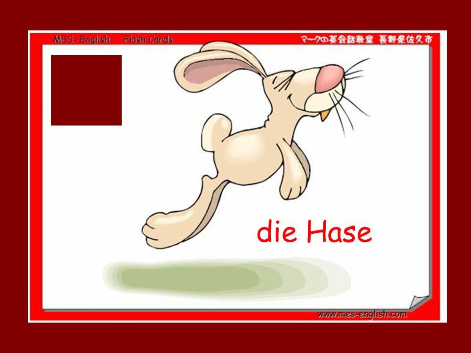 die Hase