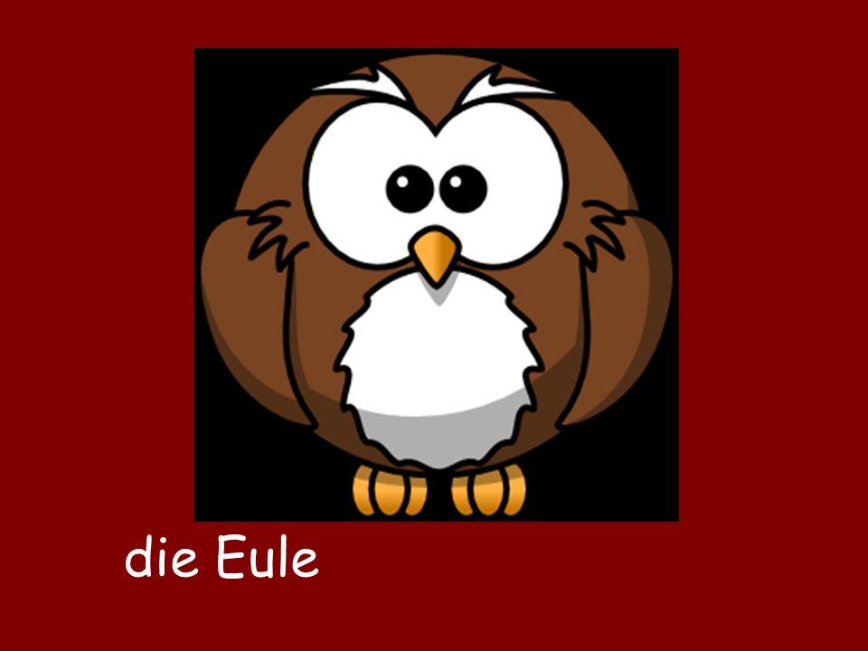 die Eule