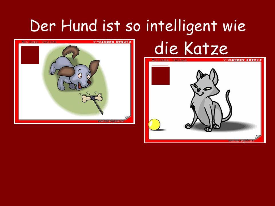 Der Hund ist so intelligent wie die Katze