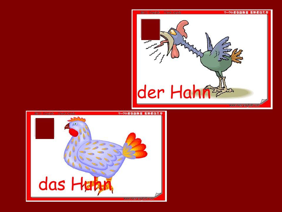 das Huhn der Hahn