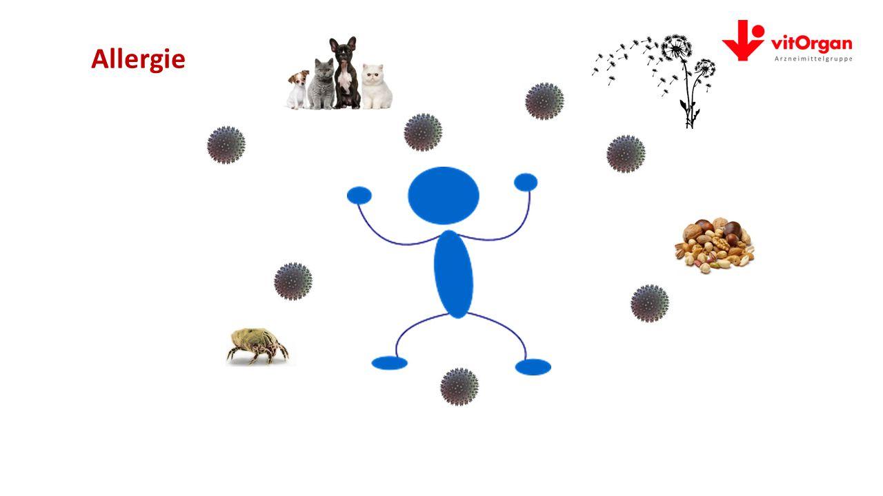 Allergien – wenn das Immunsystem überreagiert allos = anders+ergon = Wirkung/Reaktion>>>anders/überempfindlich reagieren multifaktorelles, zeitgemäßes Geschehen Jeder 3.