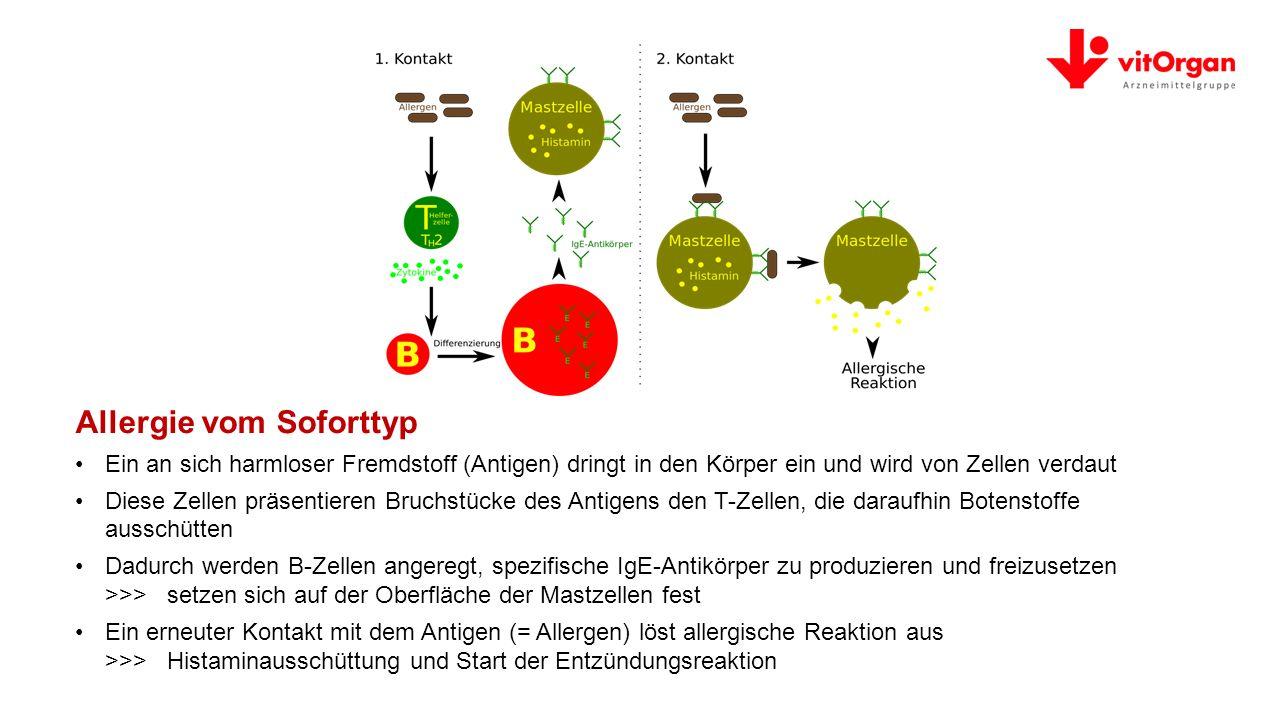 Allergie vom Soforttyp Ein an sich harmloser Fremdstoff (Antigen) dringt in den Körper ein und wird von Zellen verdaut Diese Zellen präsentieren Bruchstücke des Antigens den T-Zellen, die daraufhin Botenstoffe ausschütten Dadurch werden B-Zellen angeregt, spezifische IgE-Antikörper zu produzieren und freizusetzen >>> setzen sich auf der Oberfläche der Mastzellen fest Ein erneuter Kontakt mit dem Antigen (= Allergen) löst allergische Reaktion aus >>> Histaminausschüttung und Start der Entzündungsreaktion