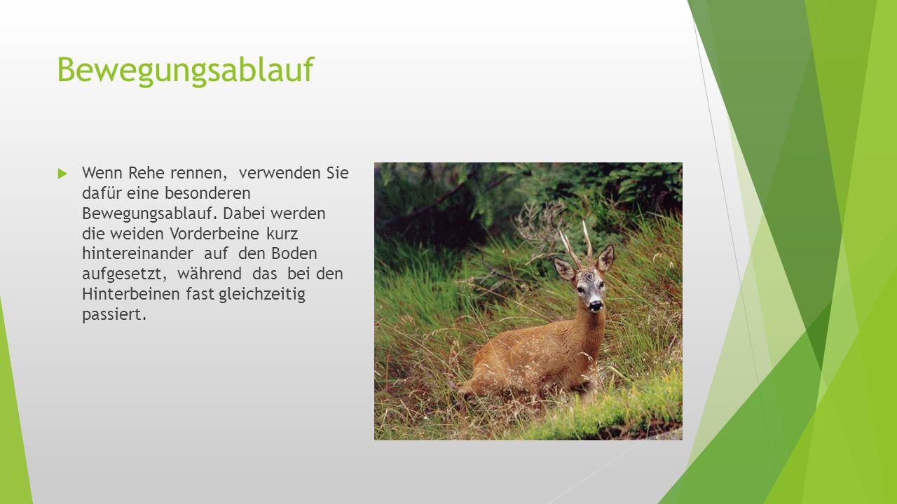 Lebensraum  Park  Wildgärten  Freier Wildbahn