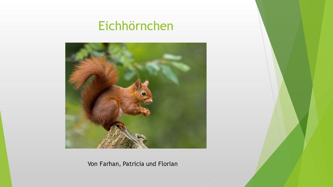 Eichhörnchen Von Farhan, Patricia und Florian