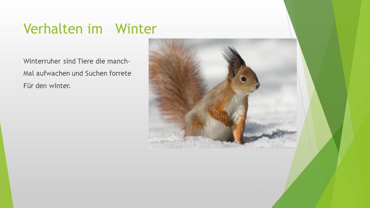 Verhalten im Winter Winterruher sind Tiere die manch- Mal aufwachen und Suchen forrete Für den winter.