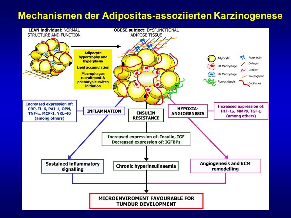Mechanismen der Adipositas-assoziierten Karzinogenese