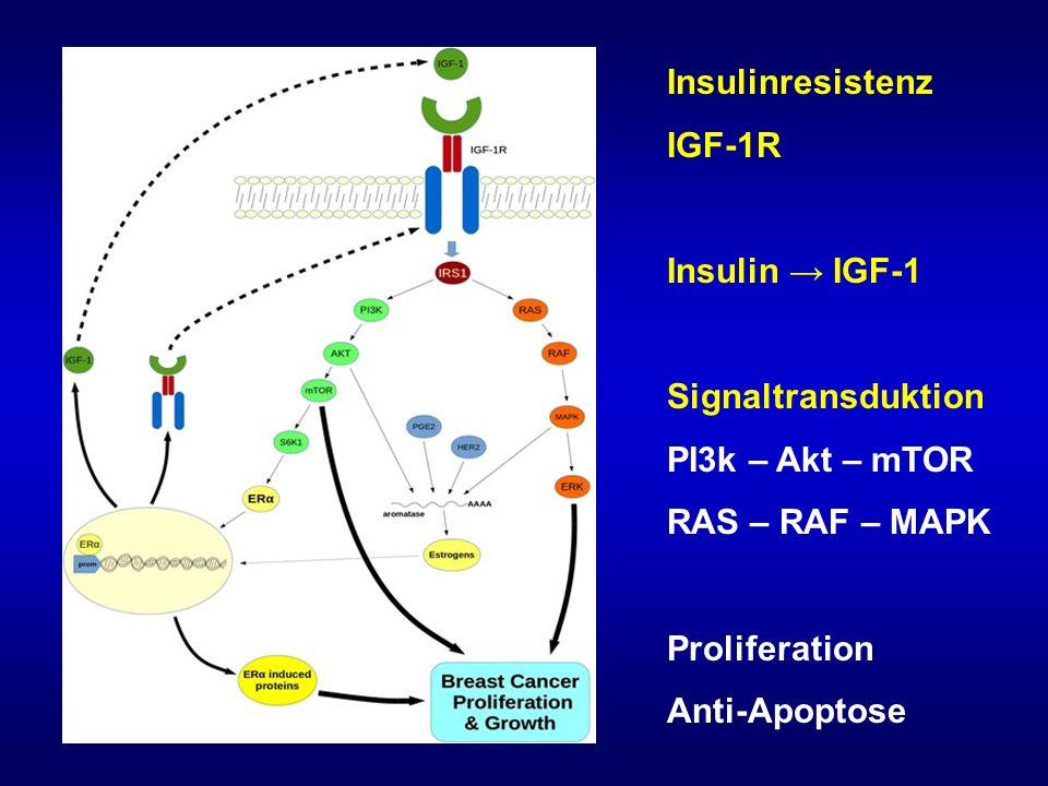 Insulinresistenz IGF-1R Insulin → IGF-1 Signaltransduktion PI3k – Akt – mTOR RAS – RAF – MAPK Proliferation Anti-Apoptose