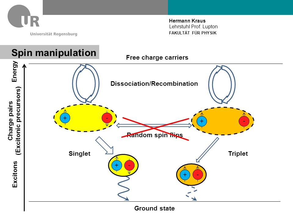 Hermann Kraus Lehrstuhl Prof. Lupton FAKULTÄT FÜR PHYSIK Spin manipulation Energy Charge pairs (Excitonic precursors) Excitons Ground state Free charg