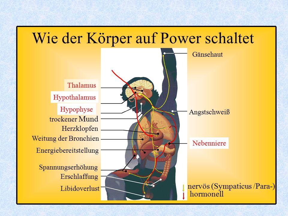 Angstschweiß Nebenniere nervös (Sympaticus /Para-) hormonell Gänsehaut Thalamus Hypothalamus Hypophyse trockener Mund Herzklopfen Weitung der Bronchie