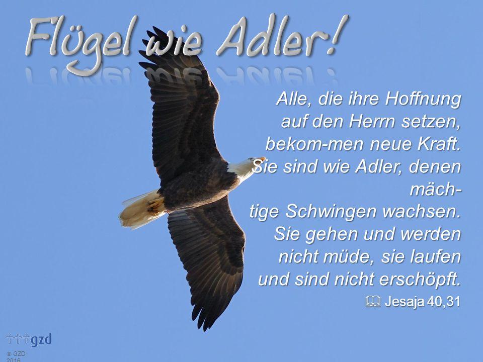 Alle, die ihre Hoffnung auf den Herrn setzen, bekom-men neue Kraft. Sie sind wie Adler, denen mäch- tige Schwingen wachsen. Sie gehen und werden nicht
