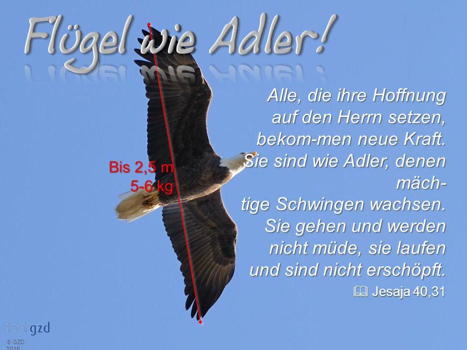  GZD 2016 Alle, die ihre Hoffnung auf den Herrn setzen, bekom-men neue Kraft. Sie sind wie Adler, denen mäch- tige Schwingen wachsen. Sie gehen und w