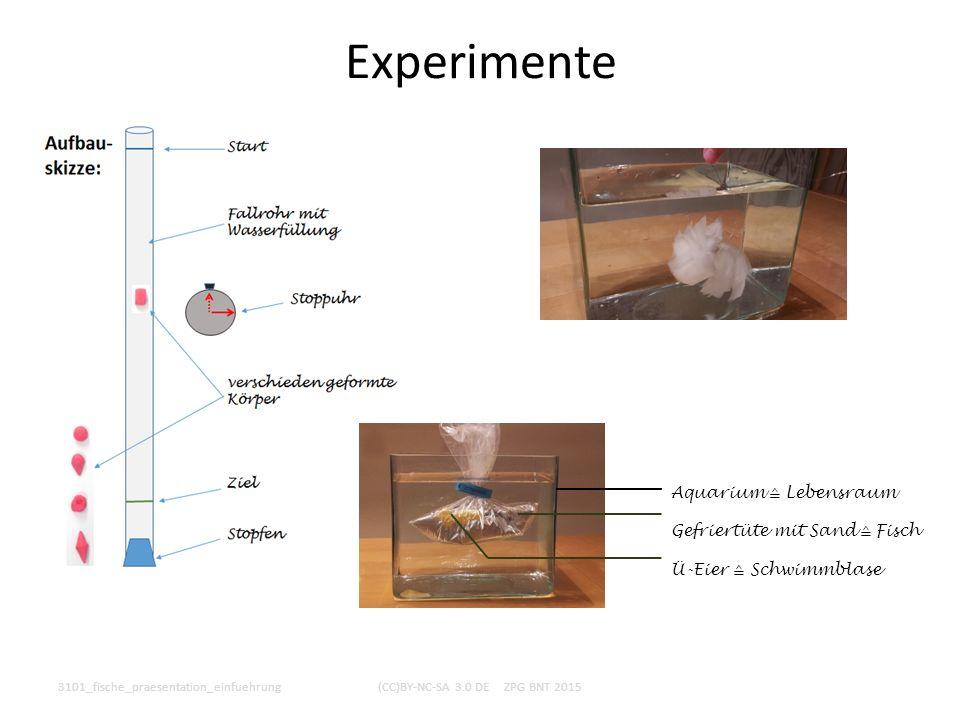Experimente 3101_fische_praesentation_einfuehrung(CC)BY-NC-SA 3.0 DE ZPG BNT 2015 Aquarium ≙ Lebensraum Gefriertüte mit Sand ≙ Fisch Ü-Eier ≙ Schwimmb