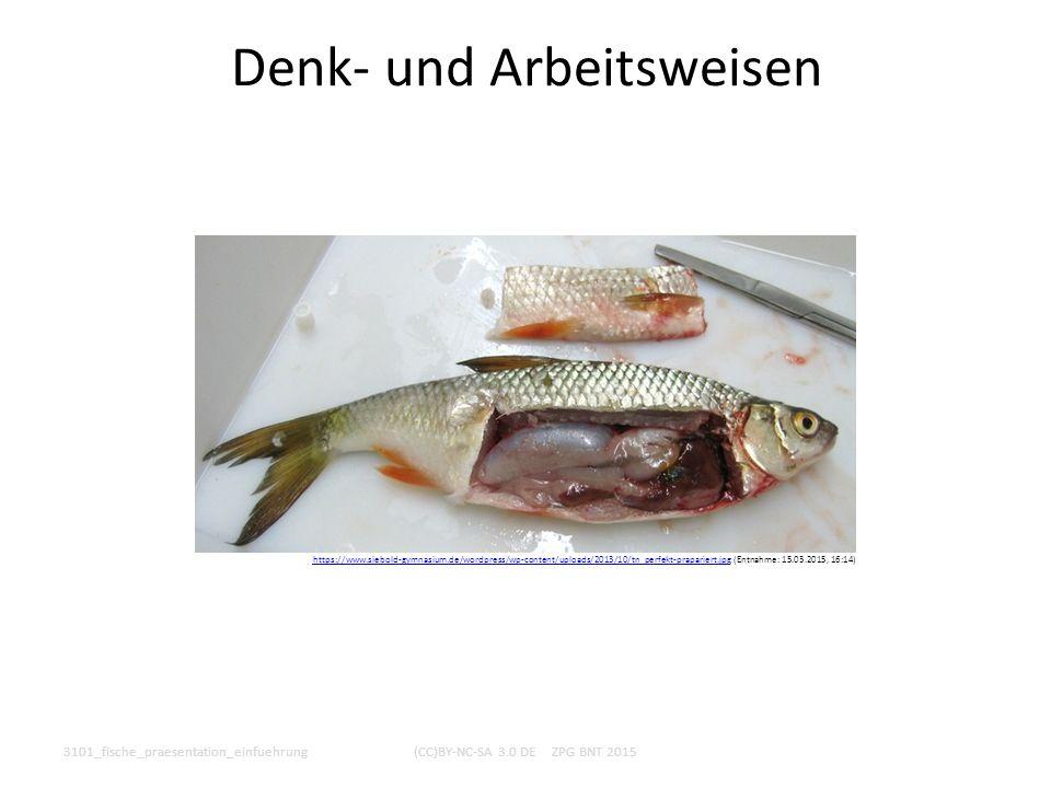 Denk- und Arbeitsweisen 3101_fische_praesentation_einfuehrung(CC)BY-NC-SA 3.0 DE ZPG BNT 2015 https://www.siebold-gymnasium.de/wordpress/wp-content/up