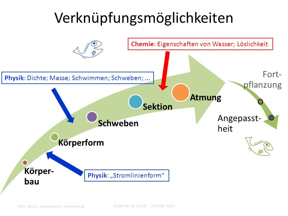 Didaktisch-methodische Hinweise 3101_fische_praesentation_einfuehrung (CC)BY-NC-SA 3.0 DE ZPG BNT 2015 Verlauf  Körper- bau Körper- form Schweben Sektion Atmung Fort- pflanzung Ange- passtheit +