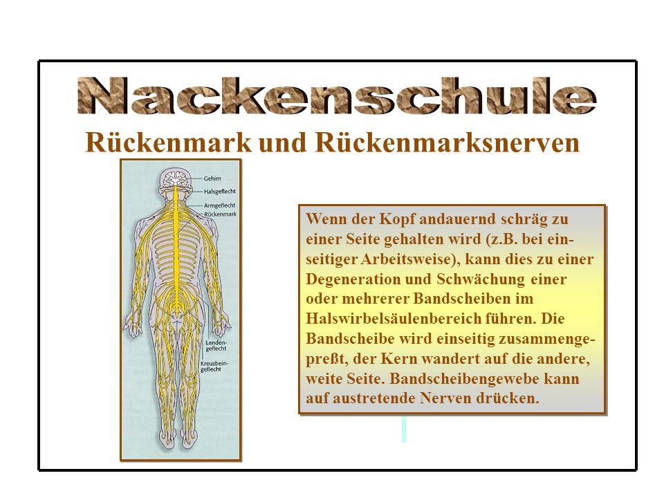Rückenmark und Rückenmarksnerven Wenn der Kopf andauernd schräg zu einer Seite gehalten wird (z.B. bei ein- seitiger Arbeitsweise), kann dies zu einer