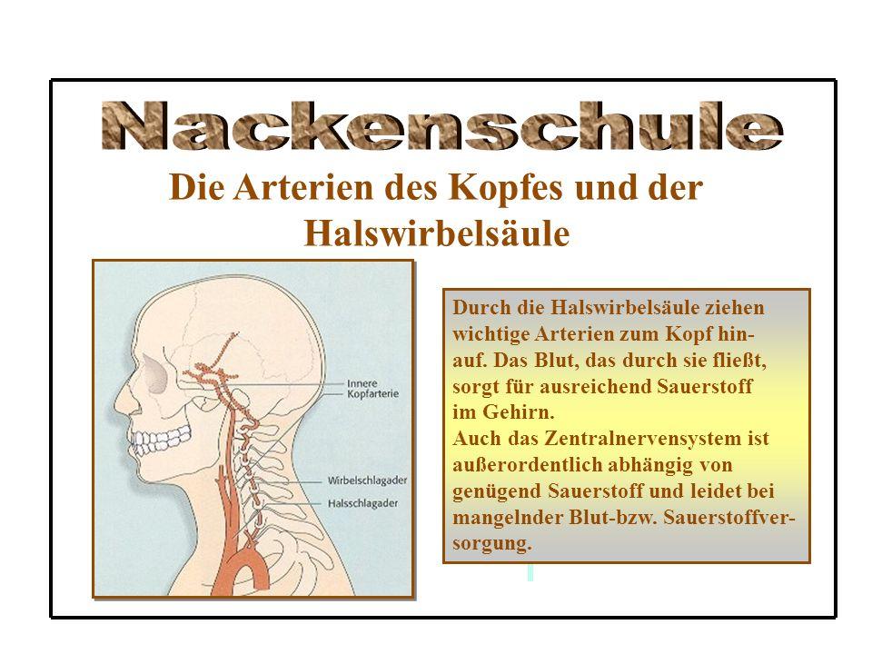Die Arterien des Kopfes und der Halswirbelsäule Durch die Halswirbelsäule ziehen wichtige Arterien zum Kopf hin- auf. Das Blut, das durch sie fließt,