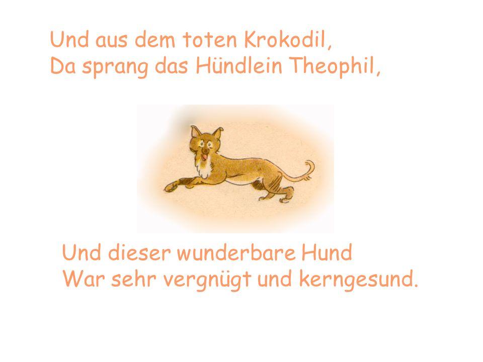 Und aus dem toten Krokodil, Da sprang das Hündlein Theophil, Und dieser wunderbare Hund War sehr vergnügt und kerngesund.