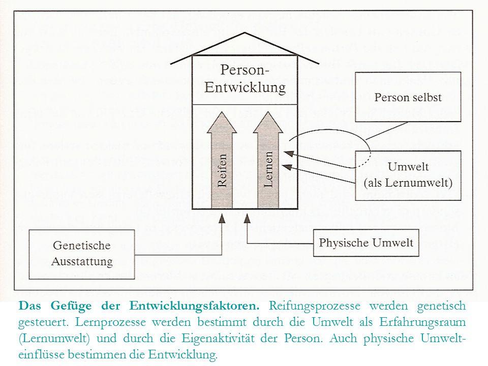 Das Gefüge der Entwicklungsfaktoren. Reifungsprozesse werden genetisch gesteuert. Lernprozesse werden bestimmt durch die Umwelt als Erfahrungsraum (Le