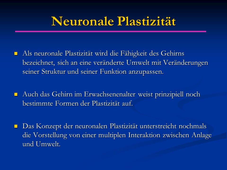 Neuronale Plastizität Als neuronale Plastizität wird die Fähigkeit des Gehirns bezeichnet, sich an eine veränderte Umwelt mit Veränderungen seiner Struktur und seiner Funktion anzupassen.