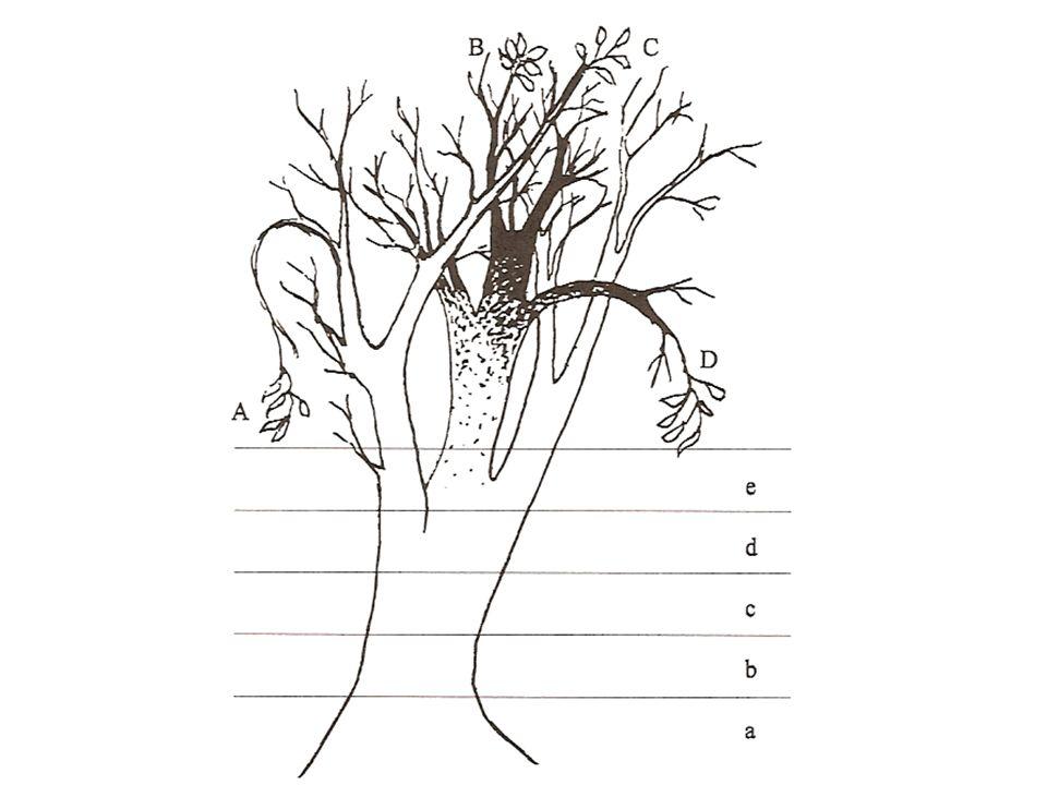 Das Modell der Entwicklungspfade beruht auf 5 Hauptannahmen Störungen sind Abweichungen vom normalen Entwicklungs- verlauf über die Zeit.