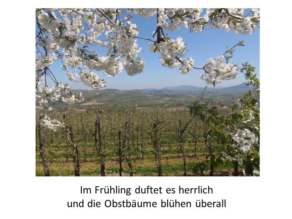 Im Frühling duftet es herrlich und die Obstbäume blühen überall