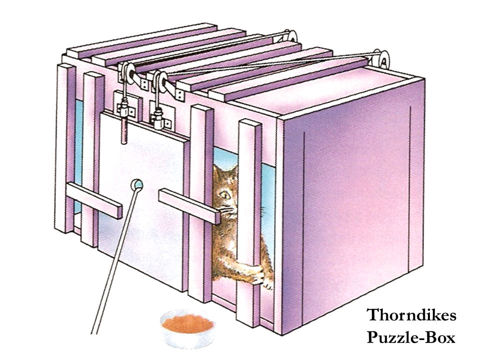 Thorndikes Puzzle-Box