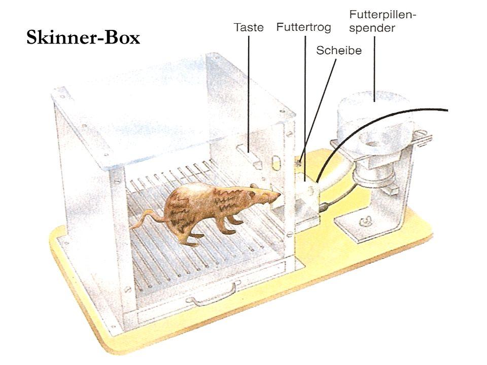 Skinner-Box