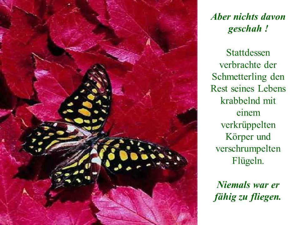 Der Mann beobachtete das Geschehen weiter, weil er erwartete, dass die Flügel sich jeden Moment öffnen, sich vergrößern und sich ausdehnen würden, um den Körper des Schmetterlings zu stützen und ihm Spannkraft zu verleihen.