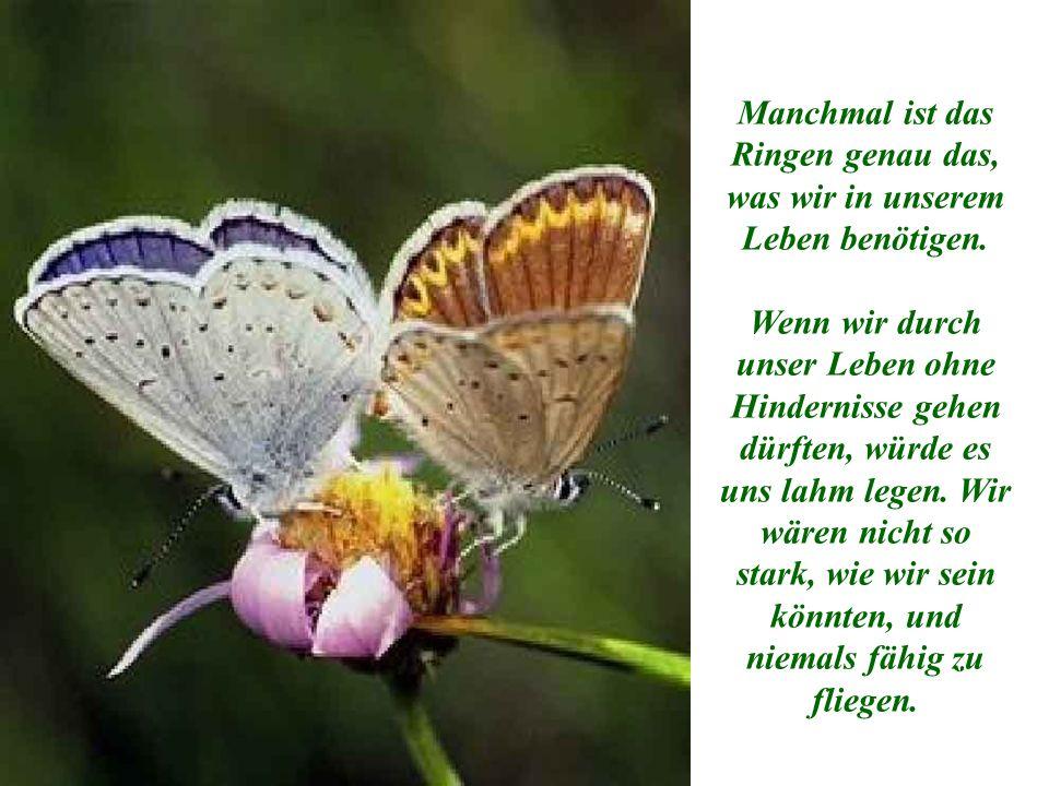 Was der Mann in seiner Güte und seinem Wohlwollen nicht verstand, war, dass das Ringen des Schmetterlings erforderlich ist, um durch die kleine Öffnung zu kommen.