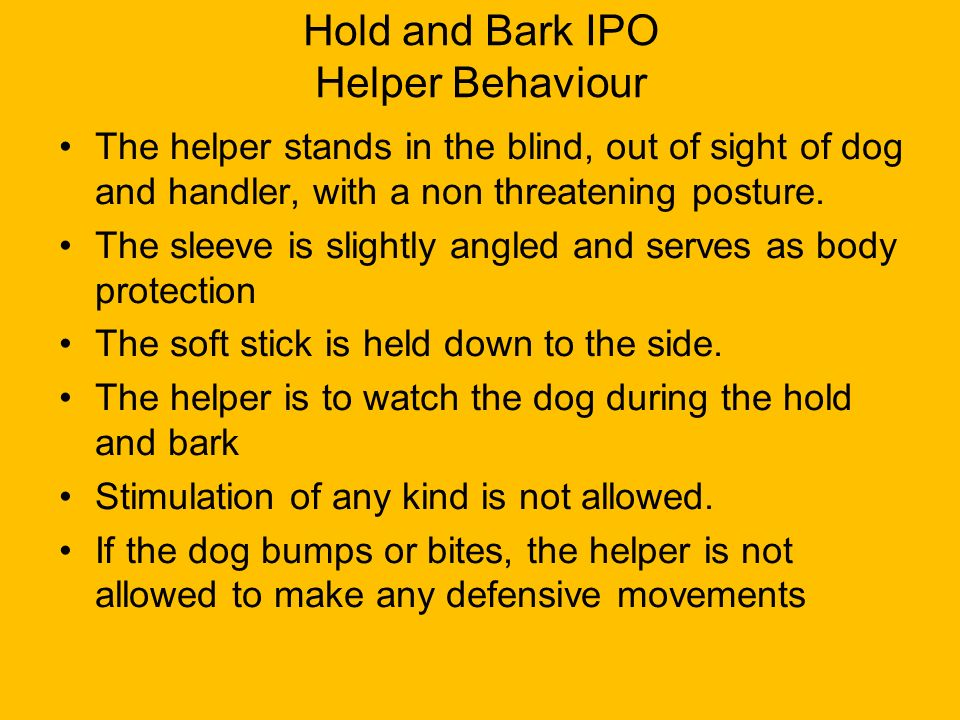 Hold and Bark IPO Helper Behaviour The helper stands in the blind, out of sight of dog and handler, with a non threatening posture. The sleeve is slig