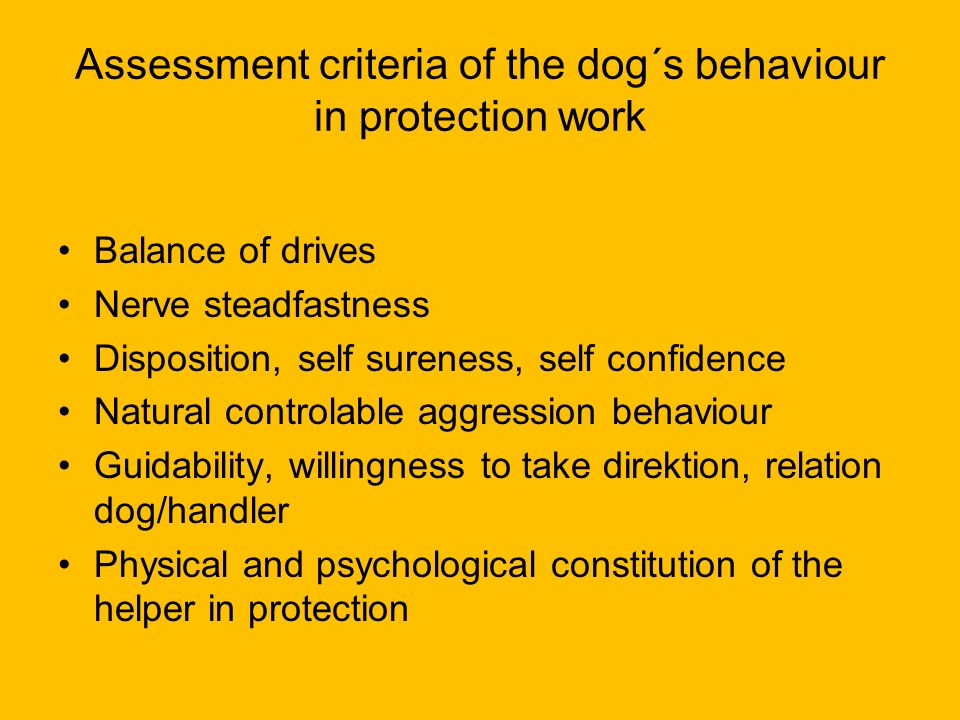 Assessment criteria of the dog´s behaviour in protection work Balance of drives Nerve steadfastness Disposition, self sureness, self confidence Natura