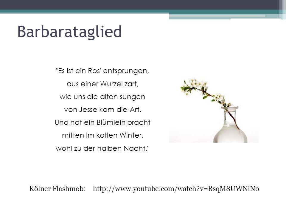 Barbarataglied