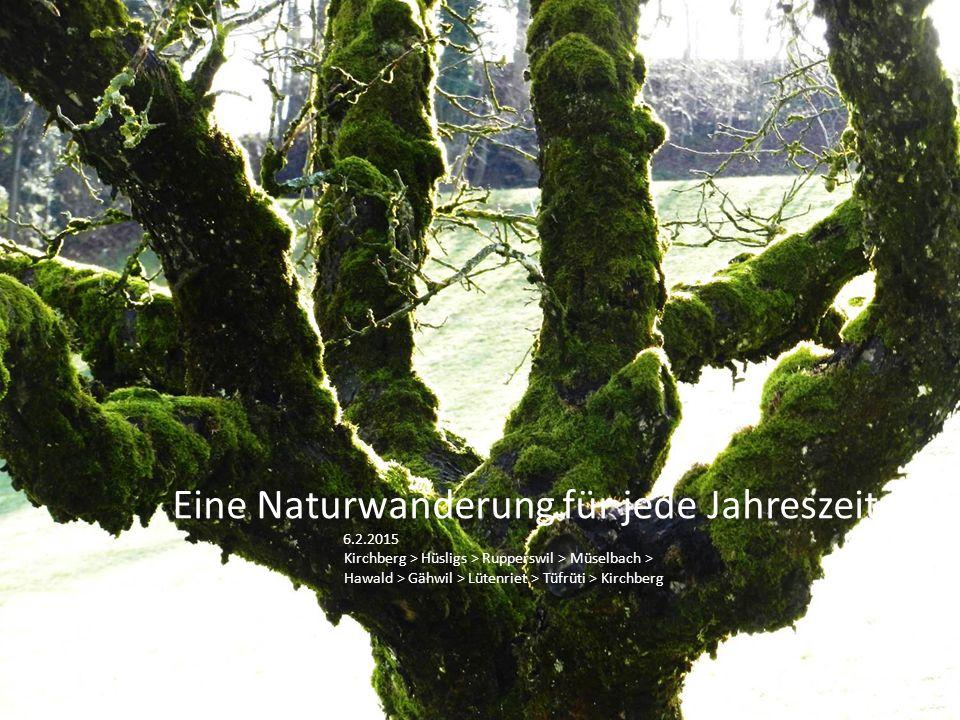 Eine Naturwanderung für jede Jahreszeit 6.2.2015 Kirchberg > Hüsligs > Rupperswil > Müselbach > Hawald > Gähwil > Lütenriet > Tüfrüti > Kirchberg