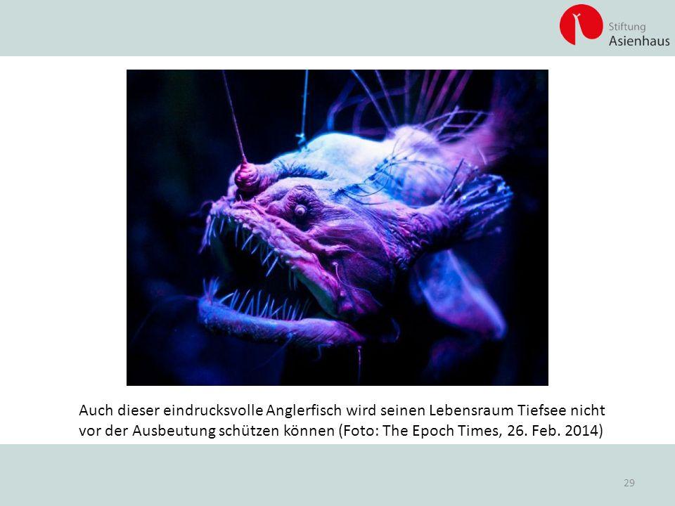 Auch dieser eindrucksvolle Anglerfisch wird seinen Lebensraum Tiefsee nicht vor der Ausbeutung schützen können (Foto: The Epoch Times, 26. Feb. 2014)