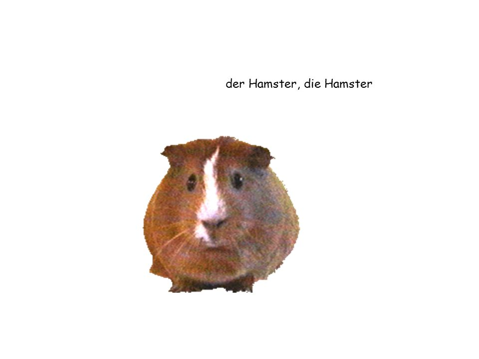 der Hamster, die Hamster